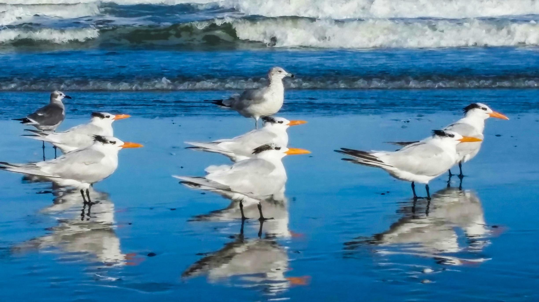 Melbourne Beach, Melbourne Beach, Florida, United States of America