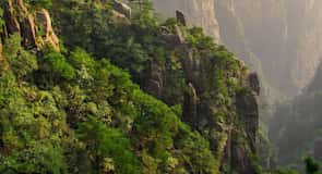 Runzhou Qu