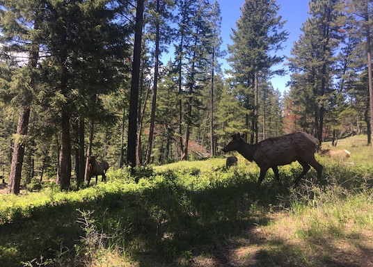 Bigfork, Montana, United States of America