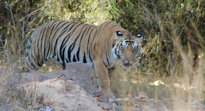 Bandhavgarh nationalpark