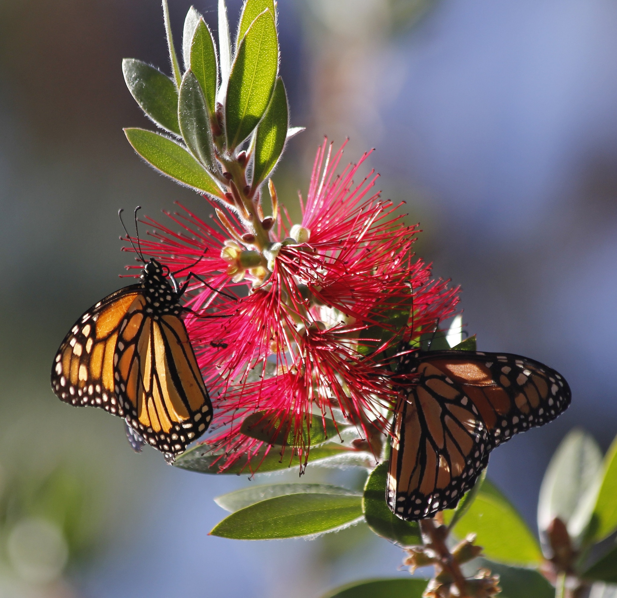Monarch Grove Butterfly Sanctuary, Pacific Grove, California, United States of America