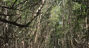 Rezerwat ekologiczny Four Mile Cove