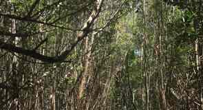 Four Mile Cove Ekoloji Koruma Alanı