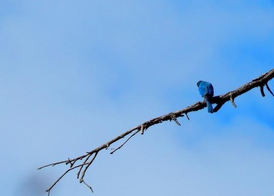 達爾豪西, 印度