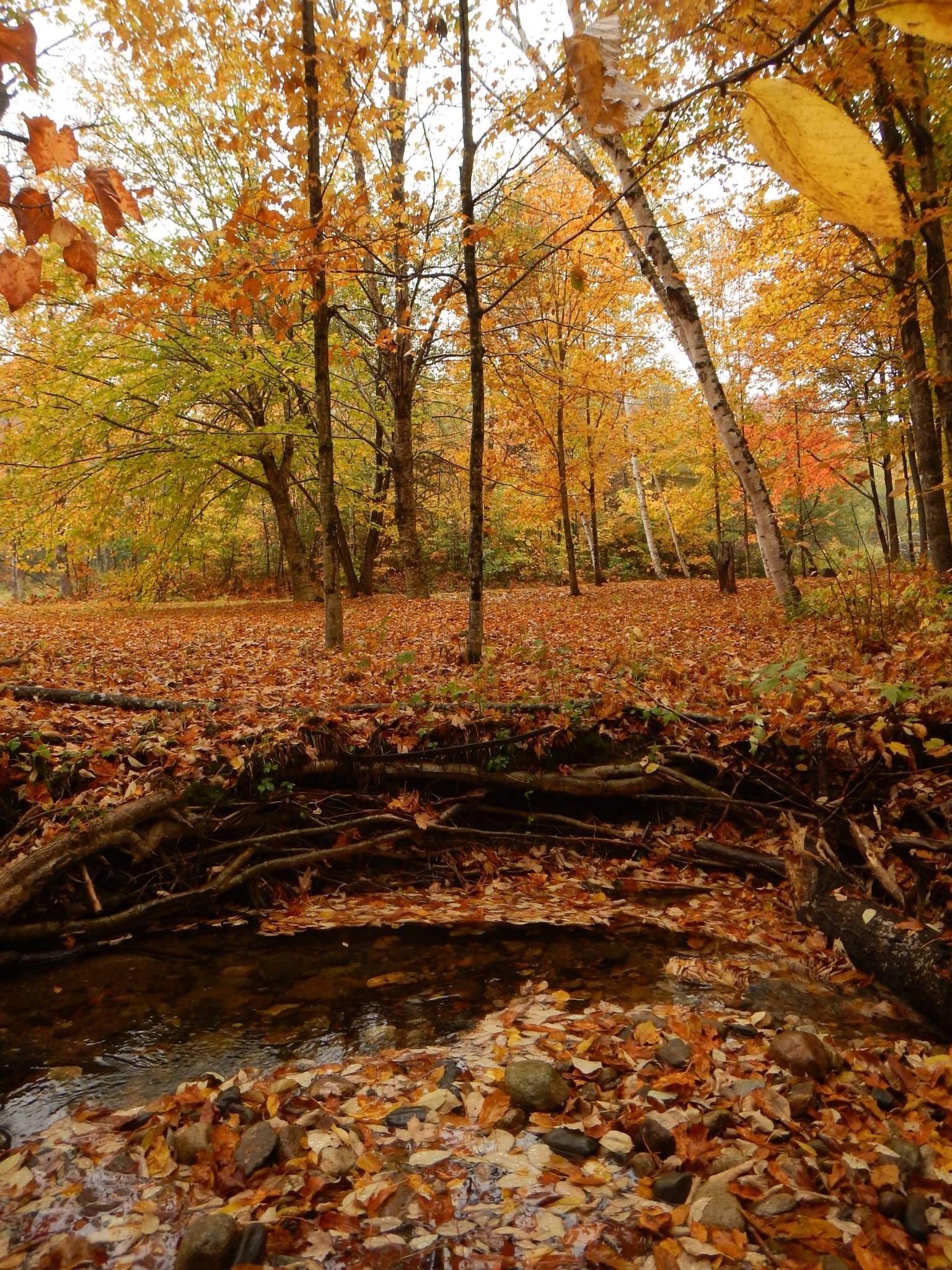 Concord Pond, Bryant Pond, Maine, United States of America
