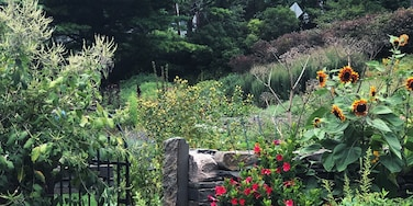 If you want some Secret Garden vibes without traveling to England, may I suggest a quick stop at the Cornell Botanic Gardens?