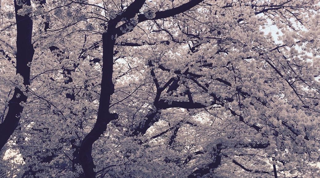 ภาพโดย yoshi tomo