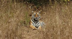 เขตอนุรักษ์พันธุ์เสือ Kanha
