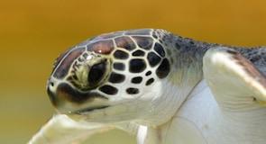 Cayman Kaplumbağa Çiftliği