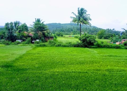 Thị trấn Calangute, Ấn Độ