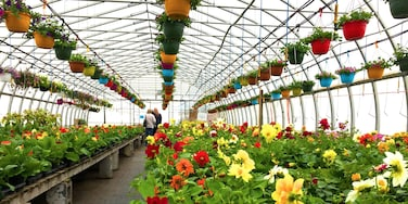 I. love. Lester's Farm. It brings colour and joy to even the coldest and dreariest July winter days