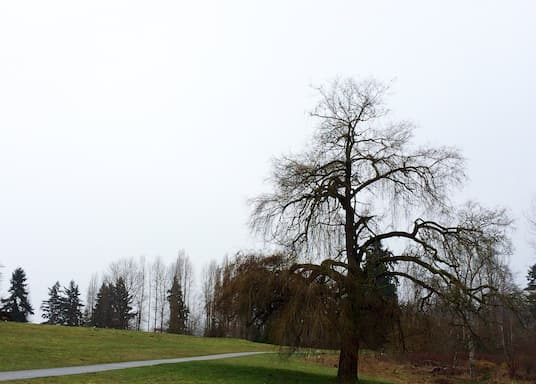 Kirkland, Washington, USA