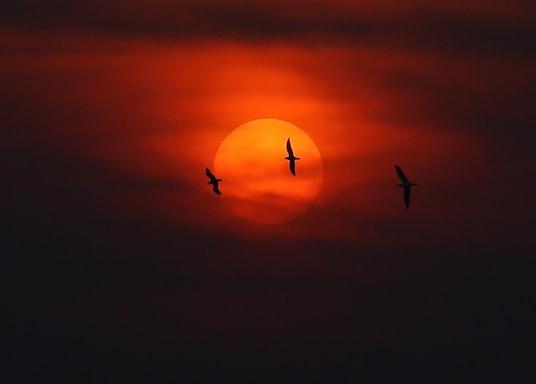 新孟買, 印度