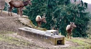 艾德湖野生動物園