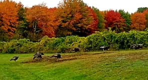 Wells Reserve at Laudholm Farms