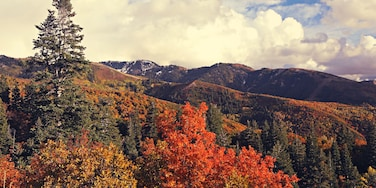 The fall colors in the mountain above Bountiful, Utah are worth exploring.