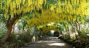 National Trust's Bodnant Garden