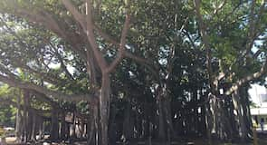 Edison Parki ajalooline rajoon