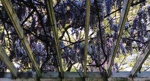 Hulda Klager Leylak Bahçesi