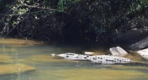 Ranganathittu Kuş Cenneti