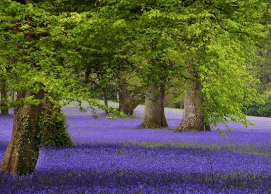Penryn, United Kingdom