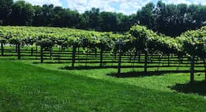 WineHaven Winery and Vineyard