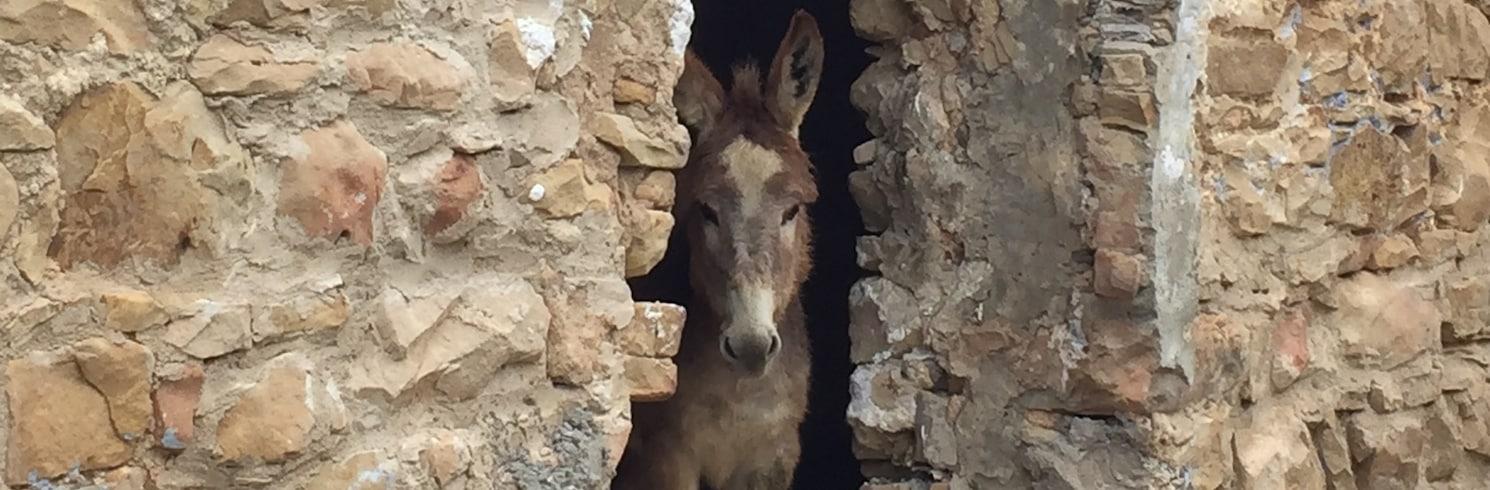 אלזריבה, תוניסיה