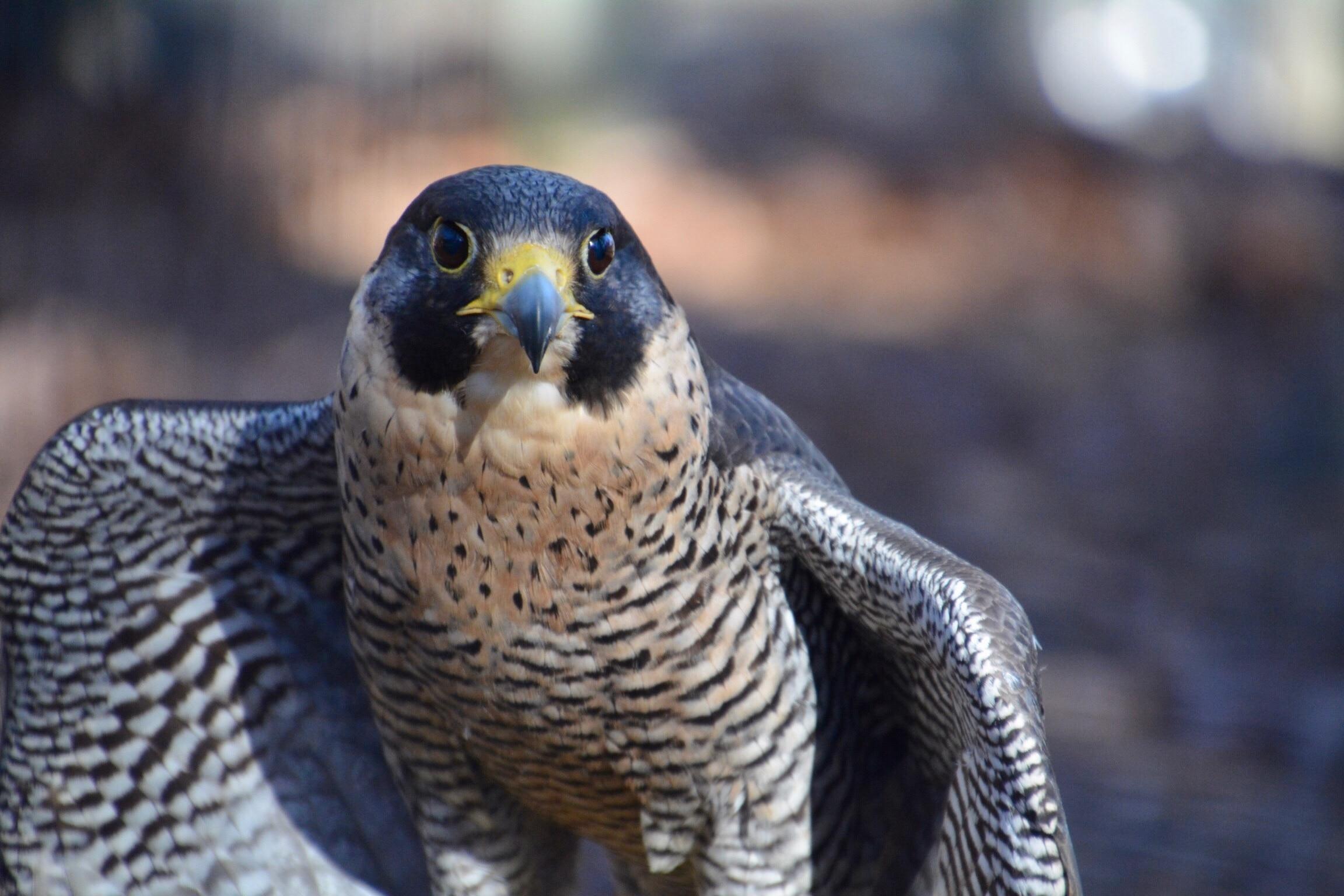 World Bird Sanctuary, Valley Park, Missouri, United States of America