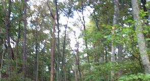 辛辛那提自然中心