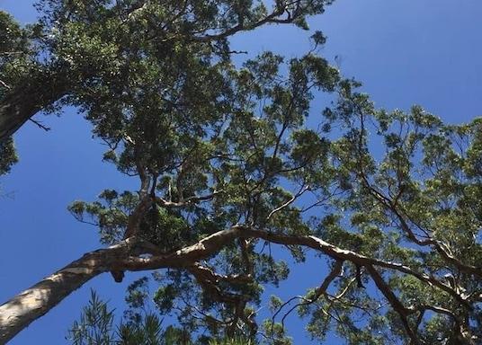 โบแรนอัป, เวสเทิร์นออสเตรเลีย, ออสเตรเลีย