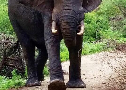 Национальный парк Крюгера, Южная Африка