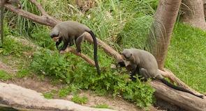 豐希羅拉動物園