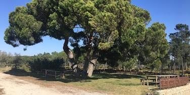 Carvalhal, Grandola, Troia, Distrito de Setúbal, Portugal