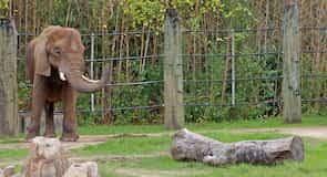 Ζωολογικός Κήπος Cameron Park Zoo
