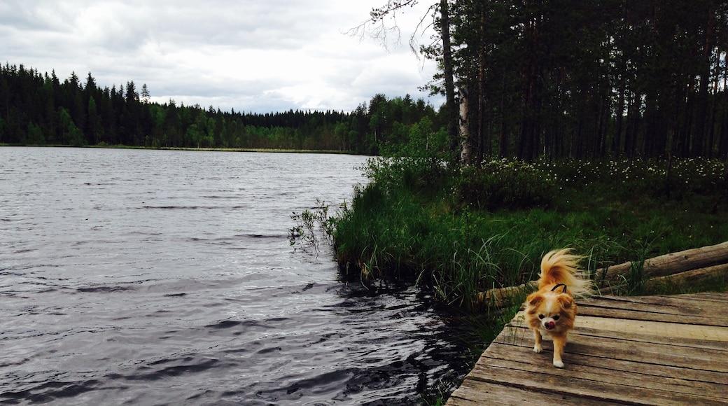 Kuva: Elisa Veteläinen