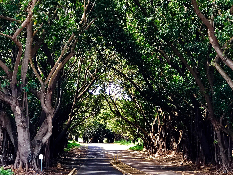 Hanamaulu, Lihue, Hawaii, United States of America