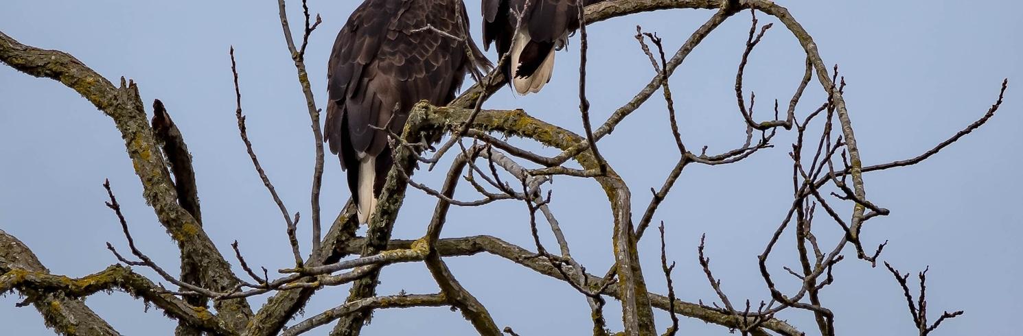 Tangent, Oregonas, Jungtinės Amerikos Valstijos