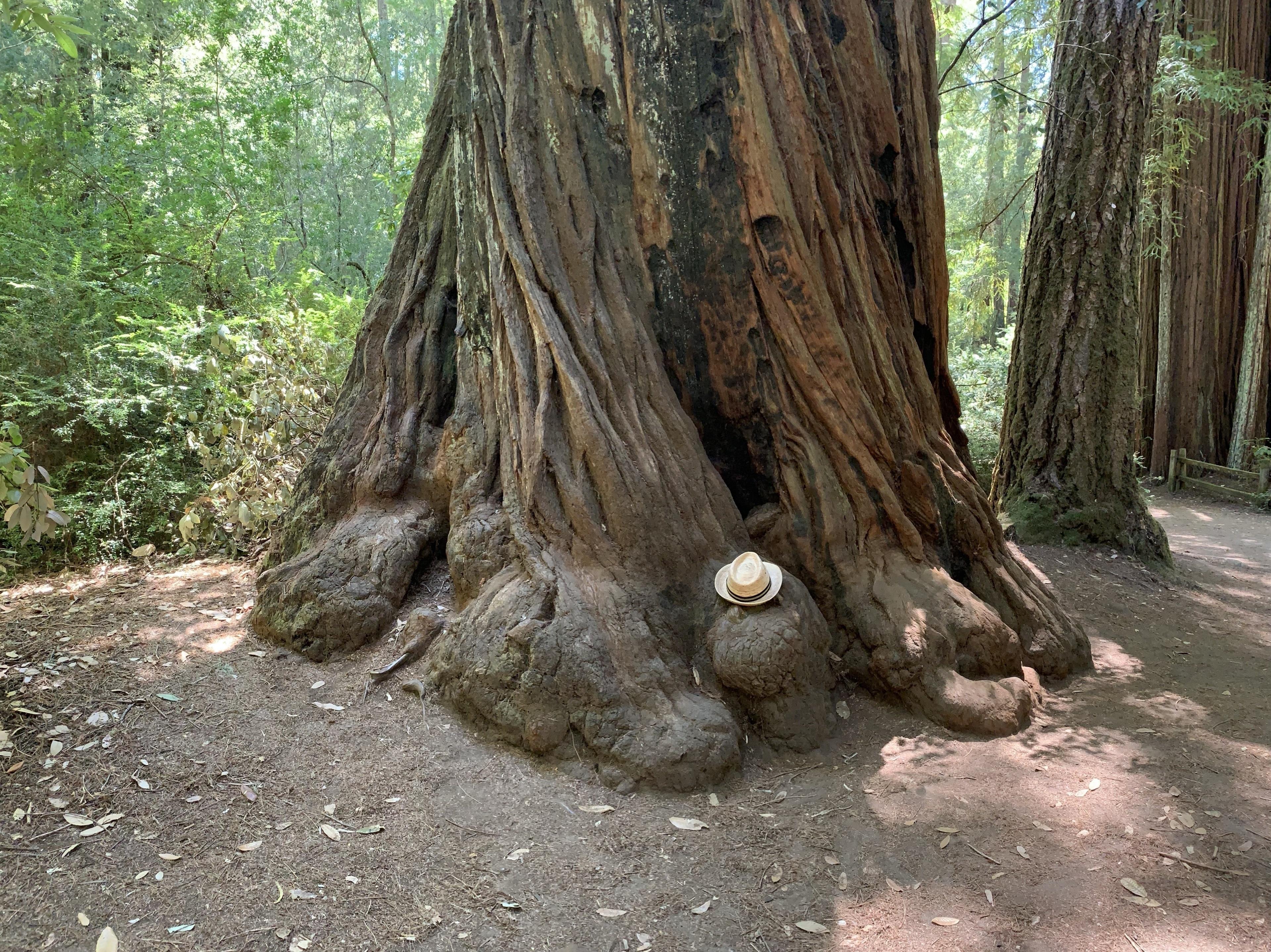 Boulder Creek, California, Estados Unidos