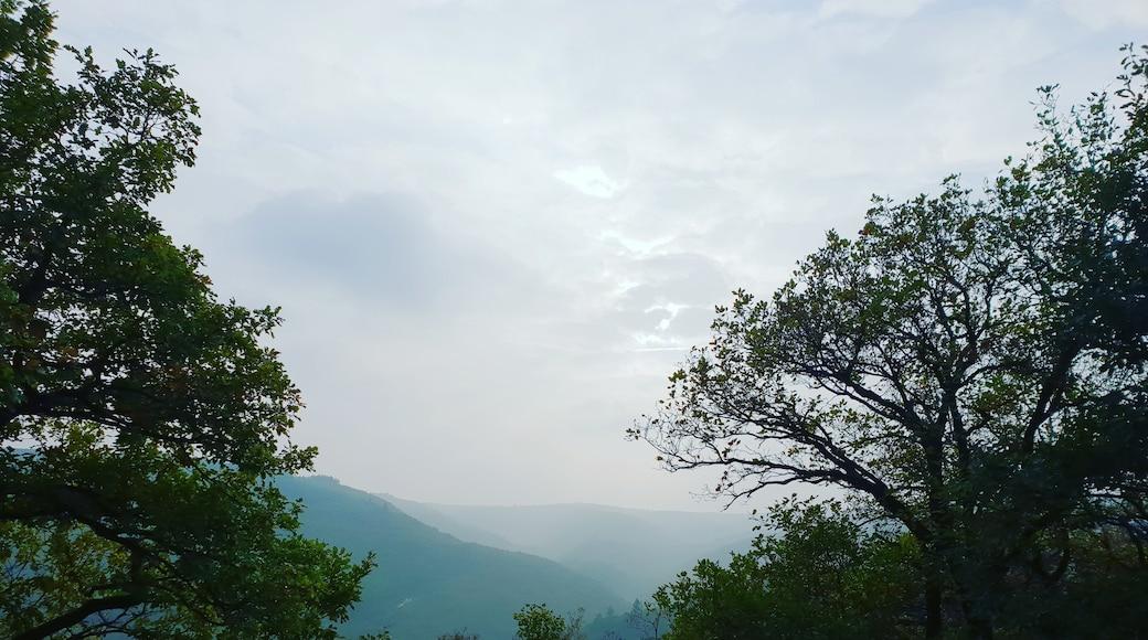 Foto von Vriddhi Singh