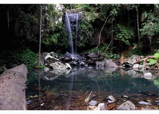 Tamborine Mountain, Queensland, Australia