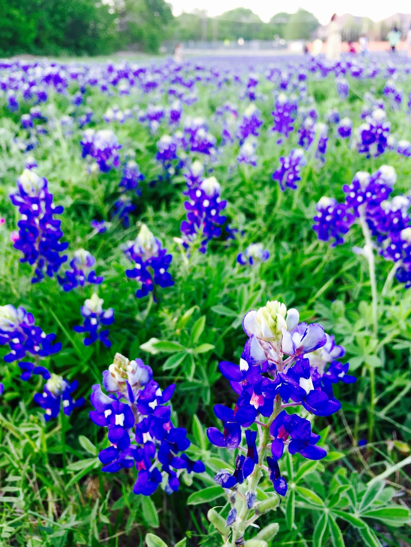 Plano, Texas, United States of America