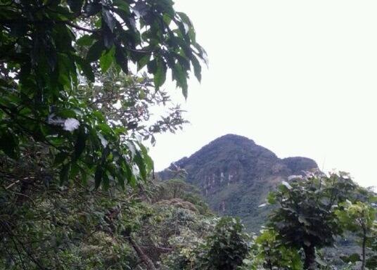 阿拉胡埃利塔, 哥斯達黎加