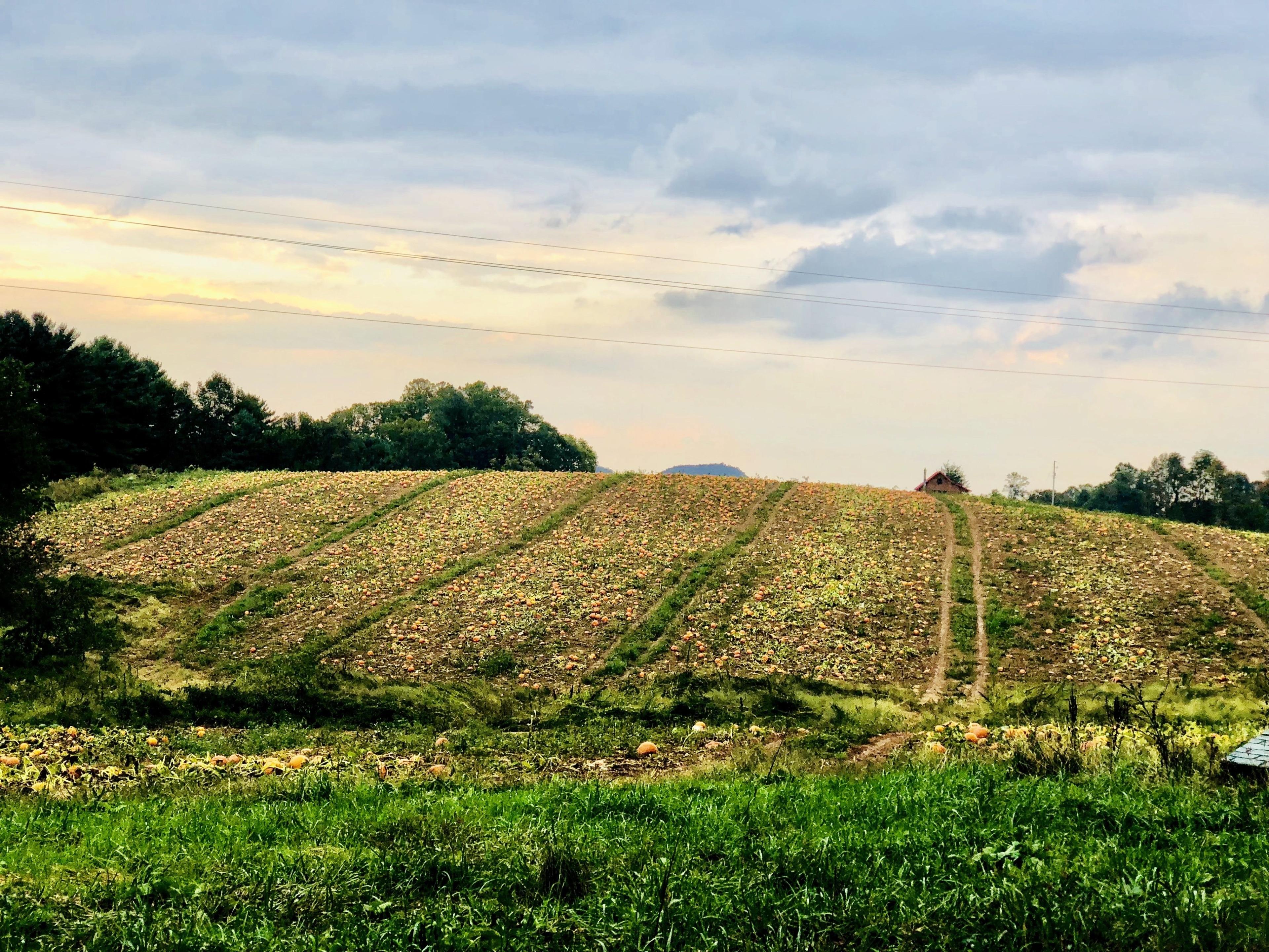 Meadows Of Dan, Virginia, Verenigde Staten