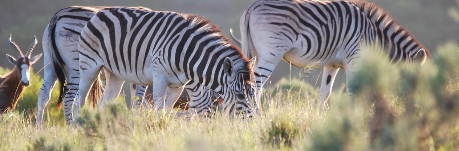أددو, جنوب أفريقيا