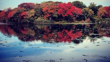 我的肯塔基老家州立公園/