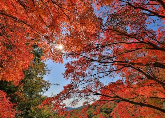 Shodoshima, Japan
