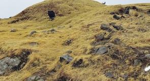 Музей заселения Исландии