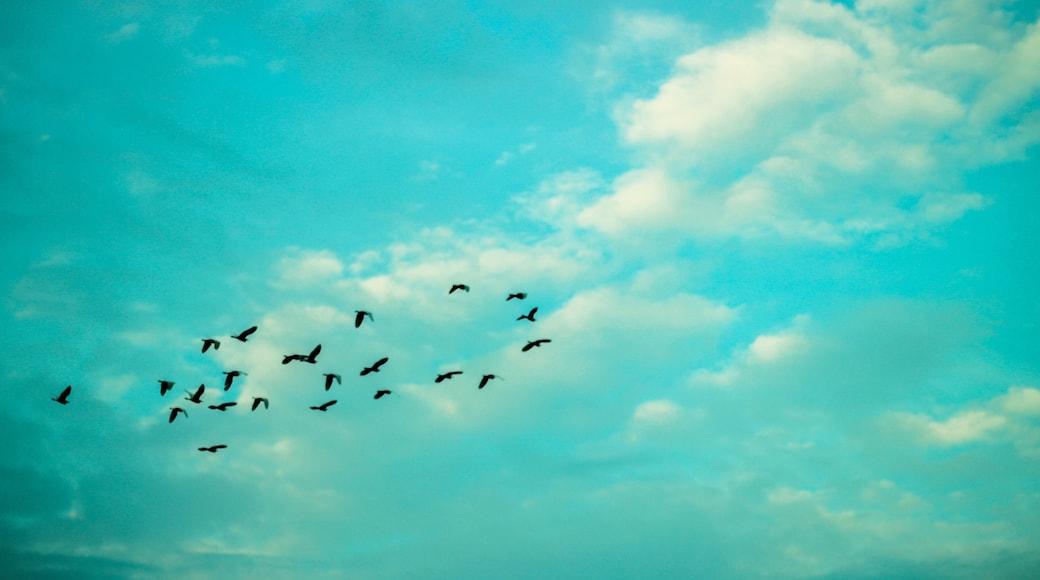 Photo by Ajay Raina
