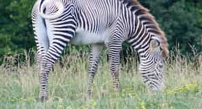 The Wilds természetvédelmi terület, szafari park