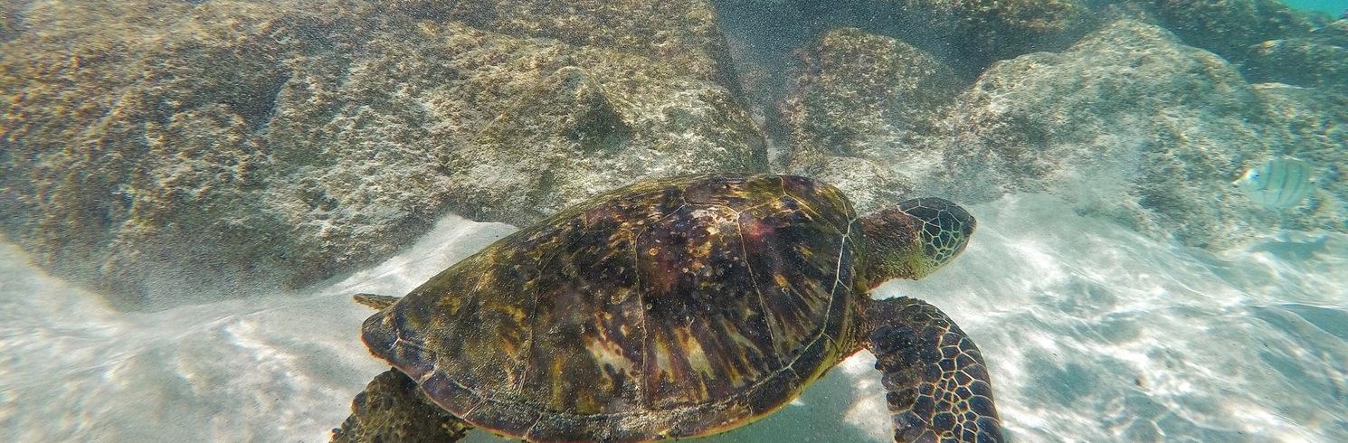 Kaupulehu, Hawaï, Verenigde Staten